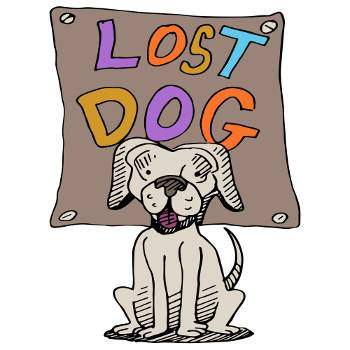 An image of a lost dog with a sign behind it's head in multi-colored letters