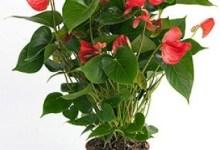 Photo of Ce plantezi, aceea culegi!