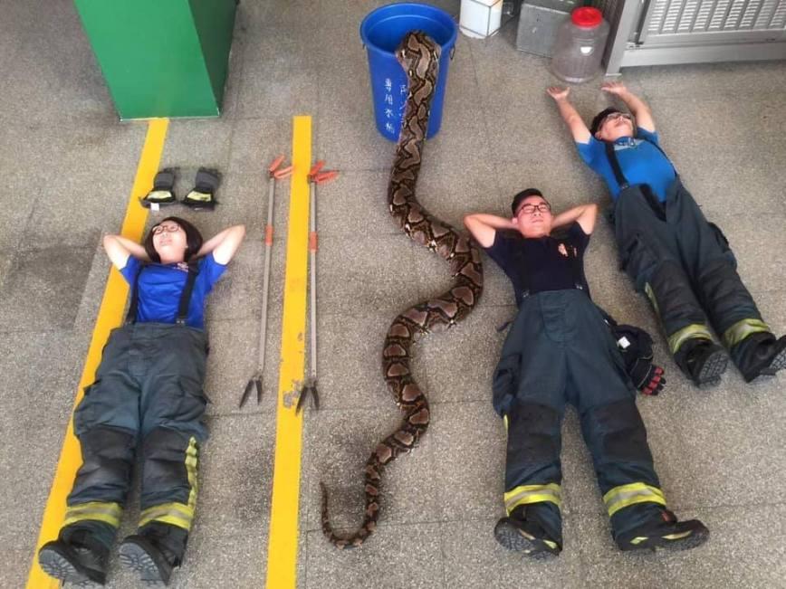 python kaohsiung