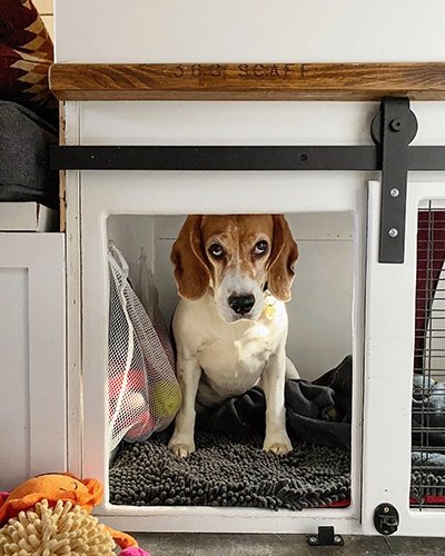 Van Life with a Dog: Kennel