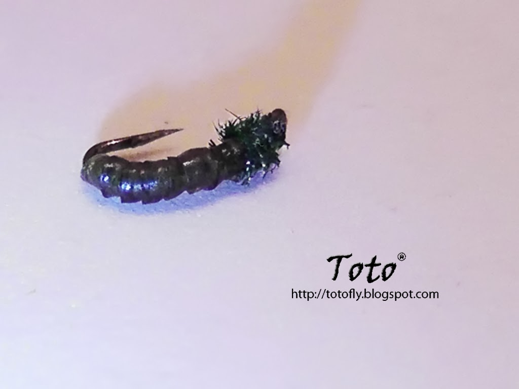 Mini Caddis Pupa by Toto®