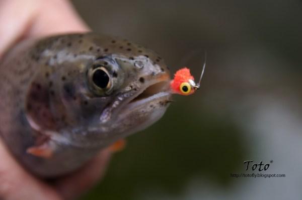 Piscicultura Río Blanco - Baby trout 3