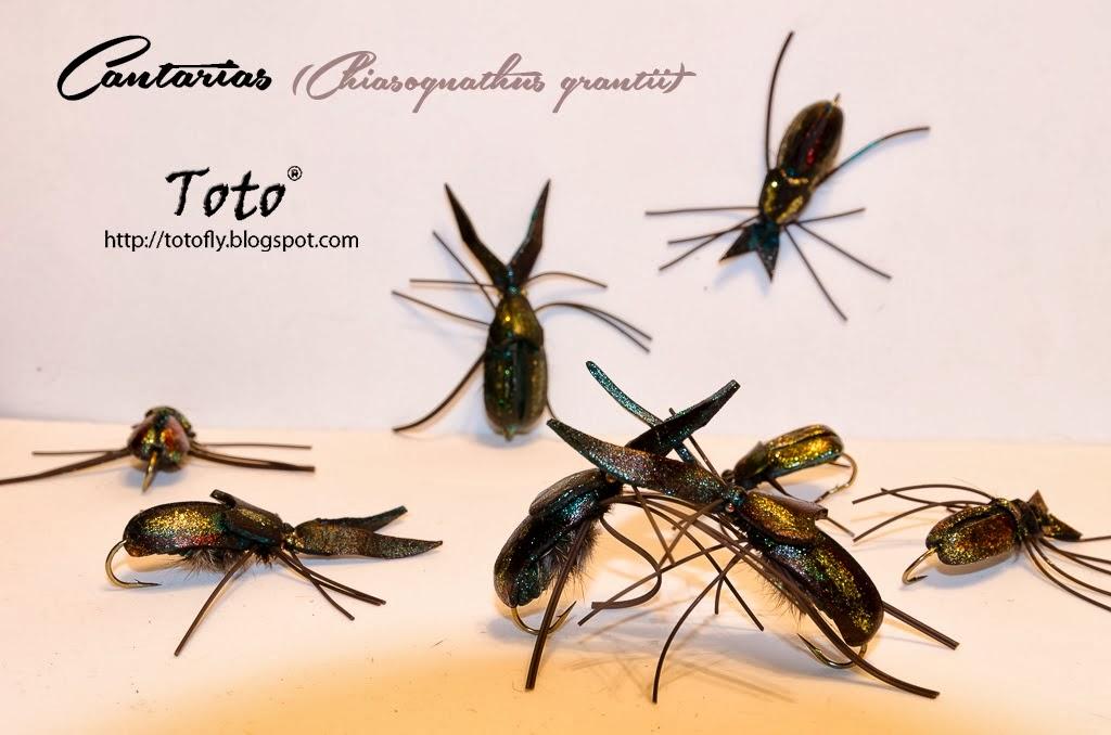 Cantarias (Chiasognathus grantii) - Una creación de Ricardo Child