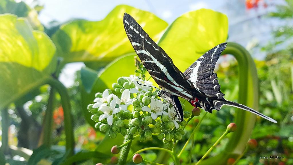 Fly fishing en Cozumel 28