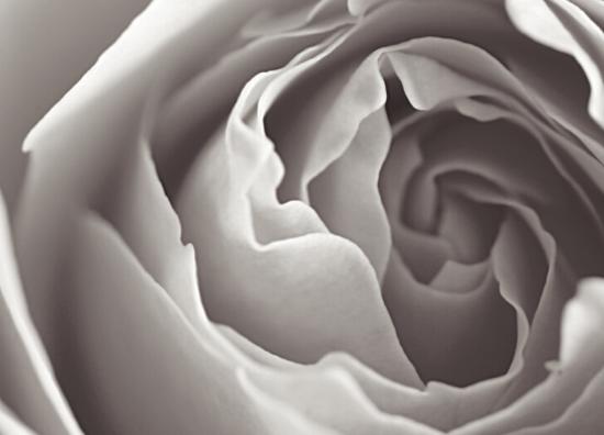 Rosebud massage