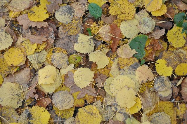 automne baisse des températures