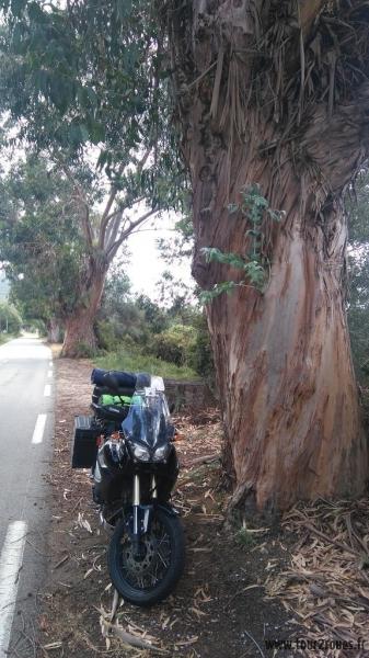 tour-corse-moto-eucalyptus