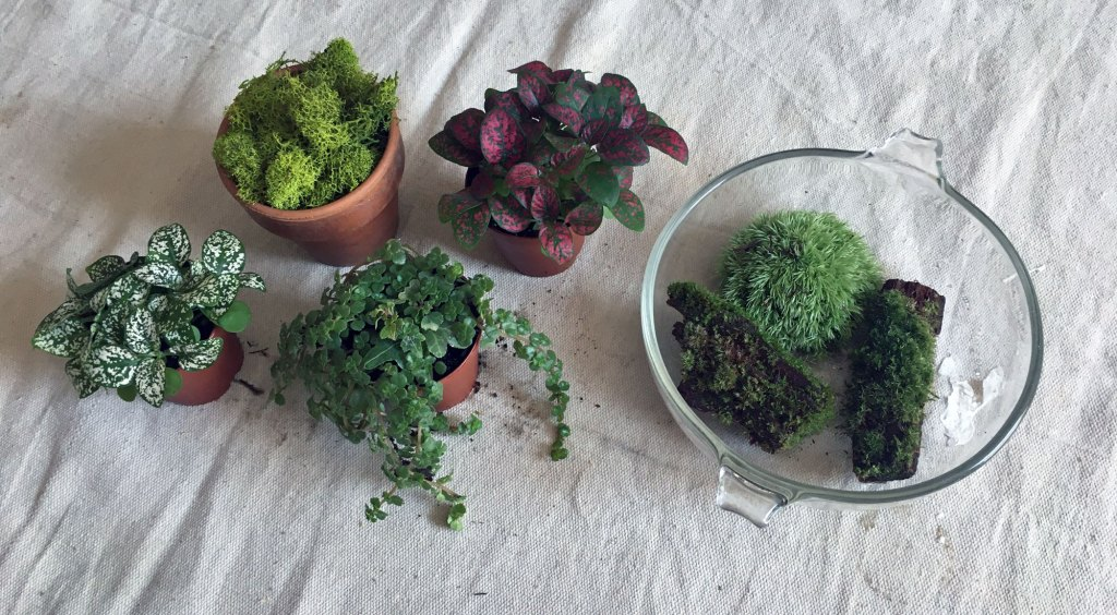 a variety of small plants and moss to use when making a terrarium