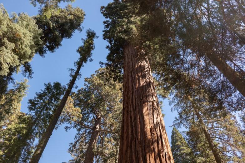 2018-09-20 - Sequoia Park-14