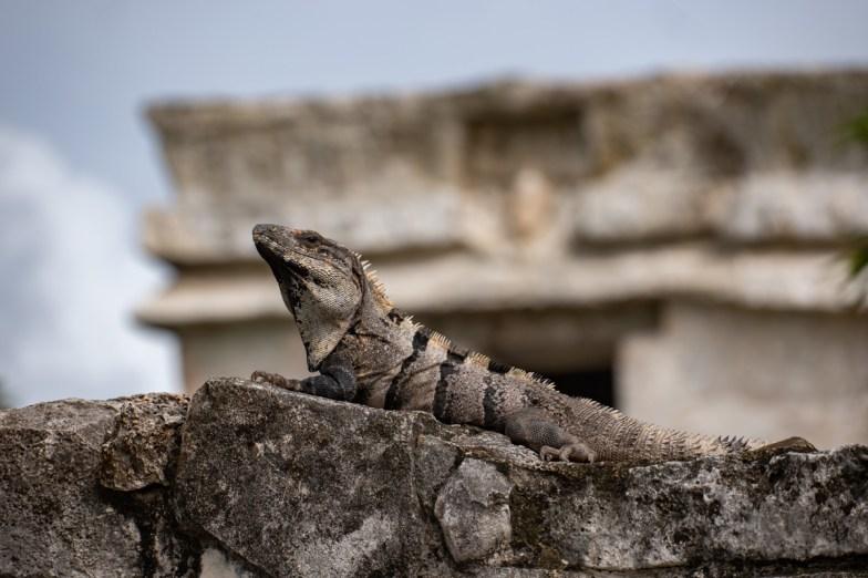 2018-10-07 - Tulum - Site Maya-16