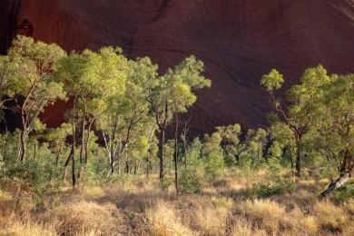 2019-01-23 - Uluru-13