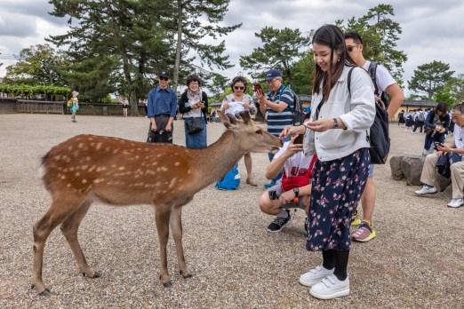2019-05-20 - Nara-7