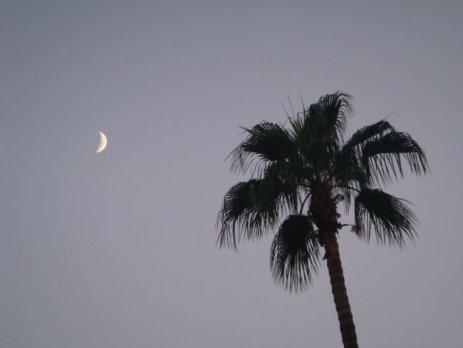 Aufgehender Mond in Palm Springs, Kalifornien
