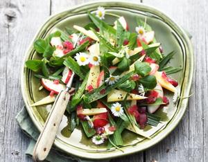 Spitzwegerich-Salat. Foto Ammergauer Alpen GmbH, Mathias Neubauer