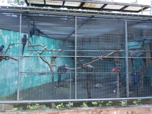 Think Rio and you'll easily recall Blu. Here are seven of these Macaws, brought here from Brazil!