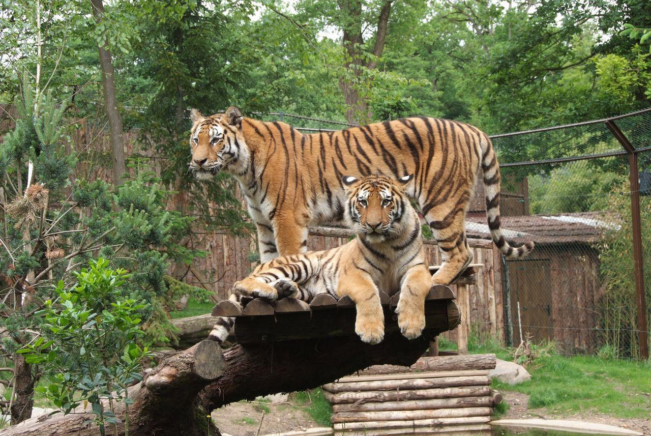 Zoo D Amneville