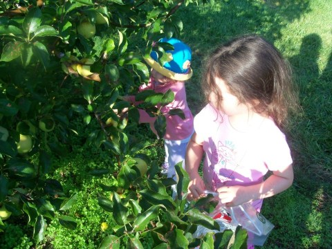 Picking Apples in Fall