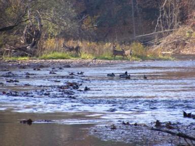 Bronte Creek in fall