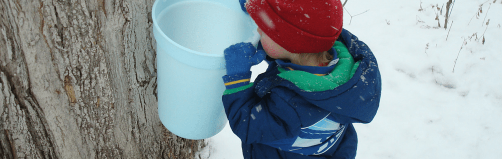 Maple Syrup Festivals