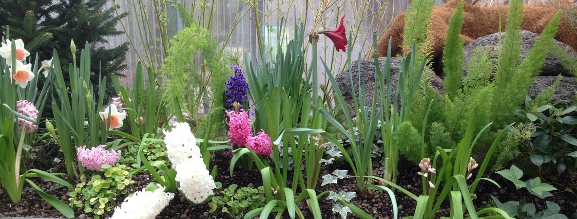 Spring Flowers @ RBG