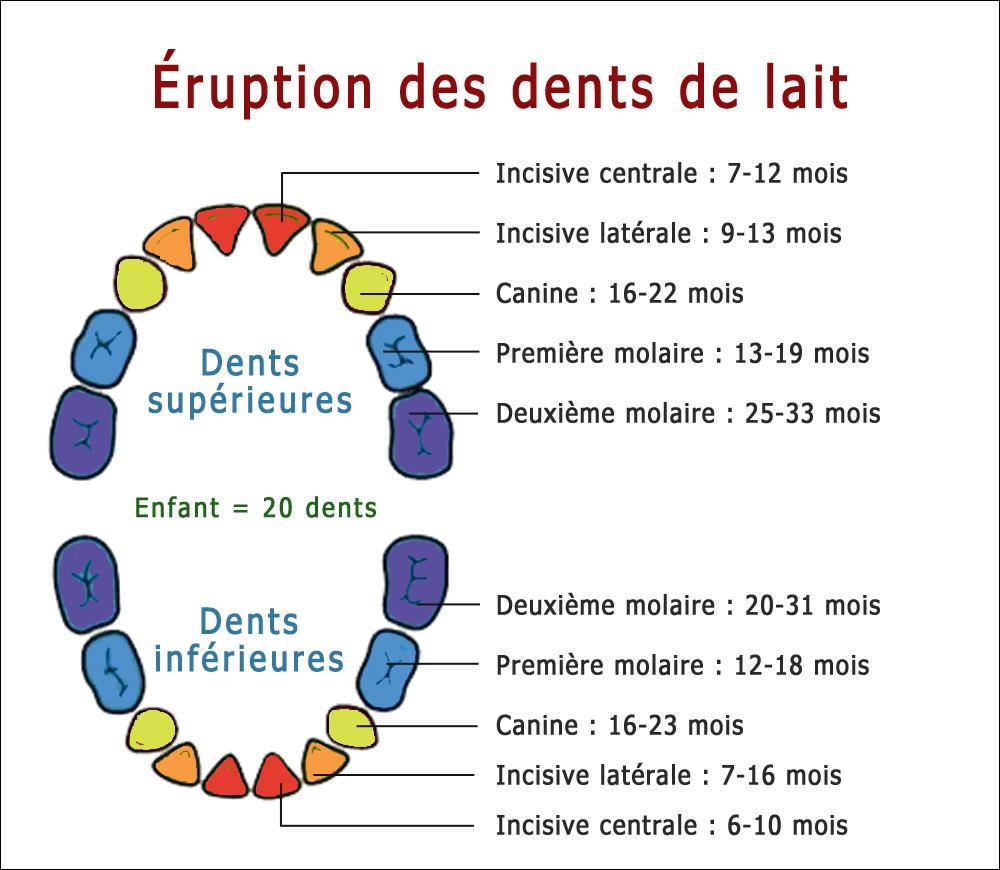 eruption-dents-lait