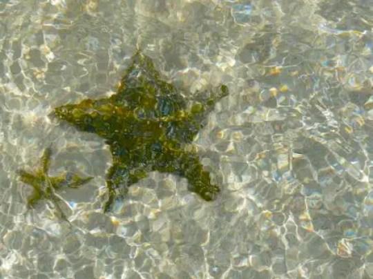 Starfishwater pink sea bahamas