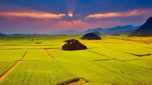 Canola Flower Fields China travel