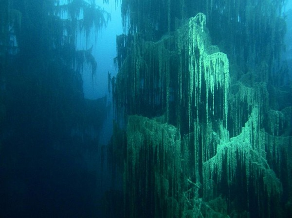 incredible sunken forest (6)