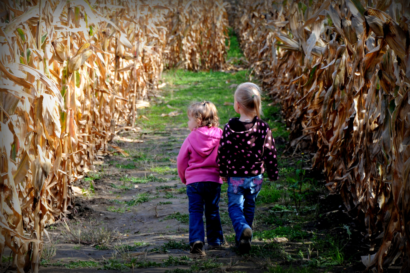 Girls Walking In Corn Maze