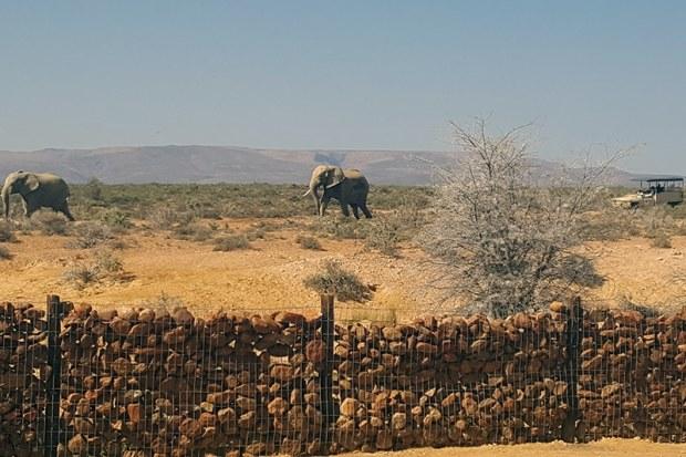Elephant at Inverdoorn Game Reserve