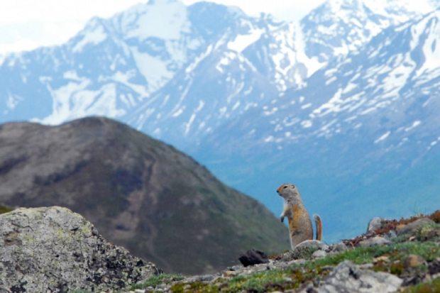 Mount Baldy Alaska