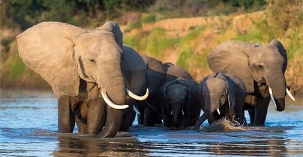 A herd of elephants in Malawi
