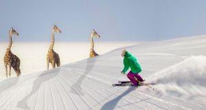 Snow skier descending on a tower of giraffe