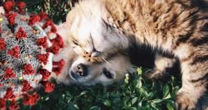 Dog and cat with Coronavirus graphic