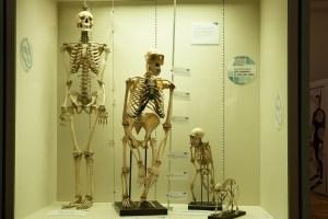 Human evolution trough traveling