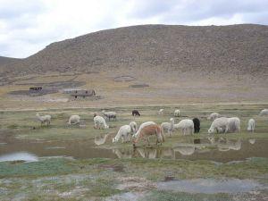High altitude Andean wetlands