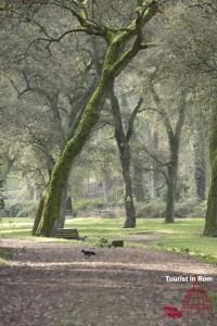 Jogging in Rom Villa Ada