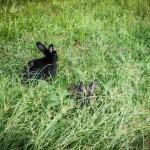 Rom mit Kindern Kaninchen am Palatin