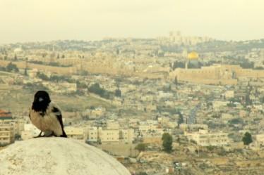Jerusalem Or Hiltch E1450443802621