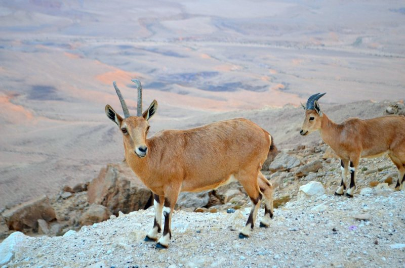 Family Adventure Day In The Negev - 1 Day Recommended Itinerary1