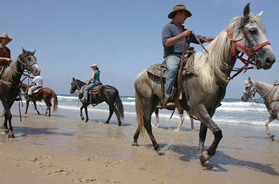 Horseridingq