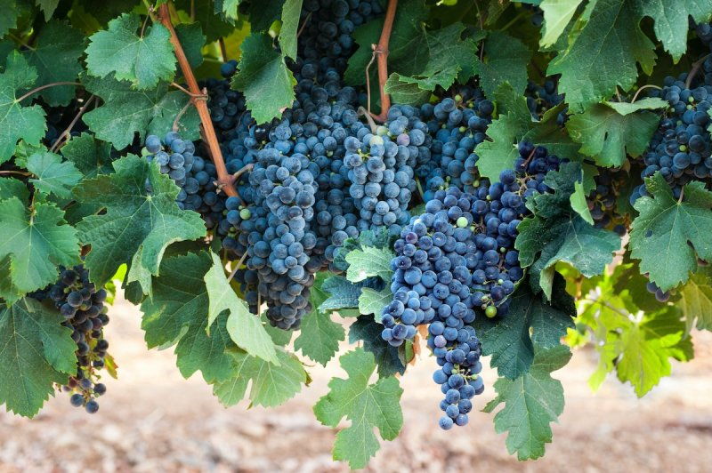 Wine Tours In Israel3