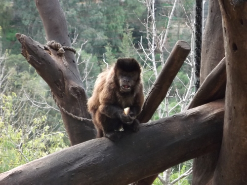 Haifa Educational Zoo