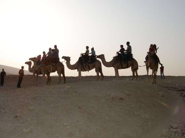Camel rides in the beautiful Negev Desert