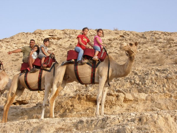 Camel rides in Israel are suitable for all ages!