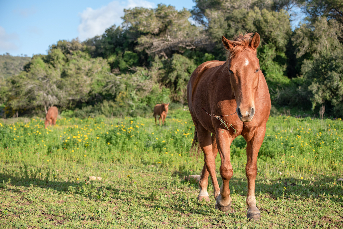 Horse Riding And Hiking Day Tour In The Galilee 4