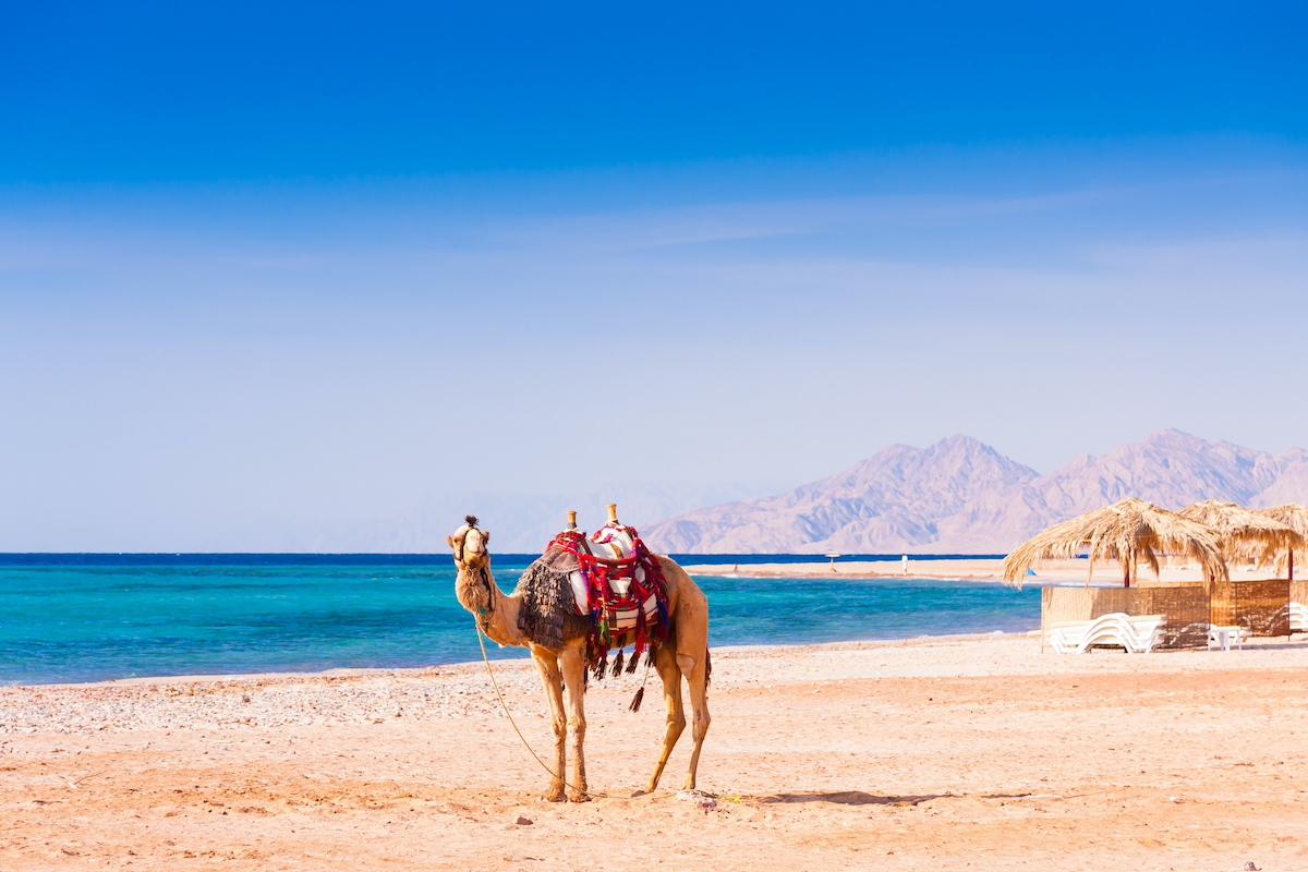 Mount Sinai & Saint Catherine Tour From Eilat Or Tel Aviv 4