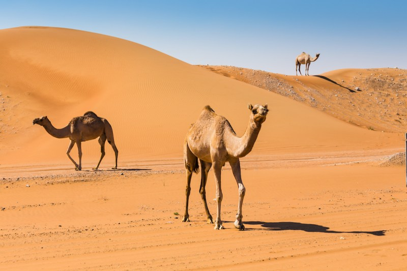 Petra And Wadi Rum 3 Day Tour From Tel Aviv And Jerusalem 4