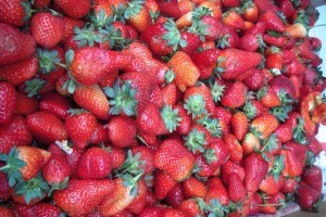 Strawberries at Melo HaTane. Image credit Laura Arenson