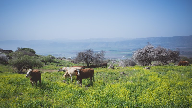 Golan Heights And Galilee Tour - 2 Days 7